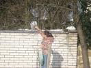 Prikrmovanie vtáčikov